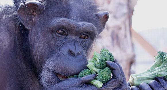 JB Mulcahy, Chimp Sanctuary NW & Rita Mashinsky, Stop UBC Animal Research