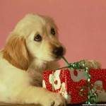 Top 9 Recommendations for Gift Giving to Animal Charities for the Holidays; & Twyla Francois, Canadian Horse Defence Coalition