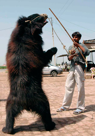 Encore Episode: Dancing Bears in India, and New Codes of Practice for the Care and Handling of Farm Animals in Canada