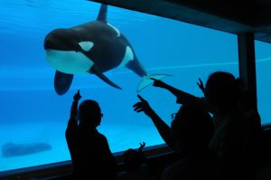 Crown Withdraws Animal Cruelty Charges Against Marineland and Photojournalist Jo-Anne McArthur Discusses Animals in Captivity