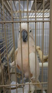 Greyhaven Exotic Bird Sanctuary's Enormous Rescue and Increased Pressure by Activists at Vancouver Park Board Meetings