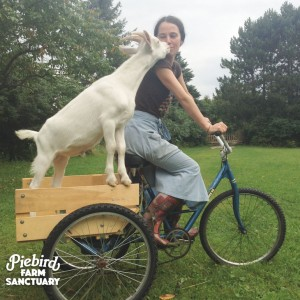 Piebird Farm Sanctuary and Empowering Nonhuman Activists